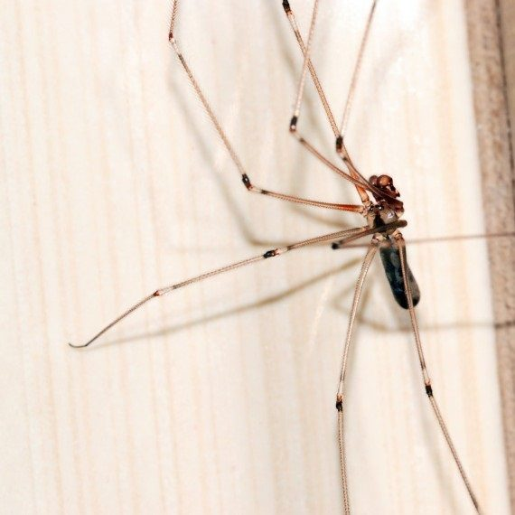 Spiders, Pest Control in Dartford, Crayford, DA1. Call Now! 020 8166 9746